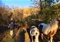 Sortie Trail Décembre (1)